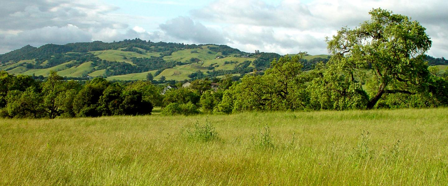 Sonoma hills, grassy field, and blue sky with clouds